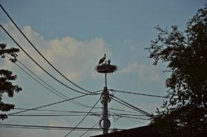 gólyafészek